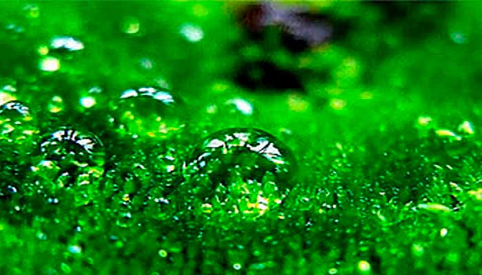 магия цвета зеленый